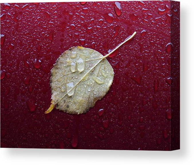 Fall Canvas Print featuring the photograph Fall Nyc by Robert Ullmann