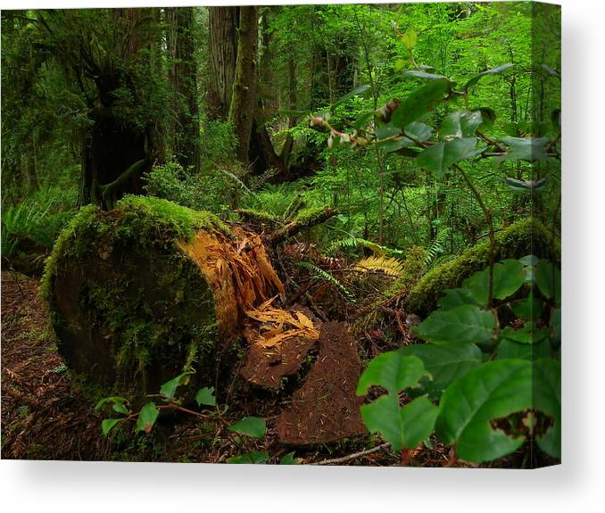 Landscape Canvas Print featuring the photograph Fallen Trunk by Charleen Treasures