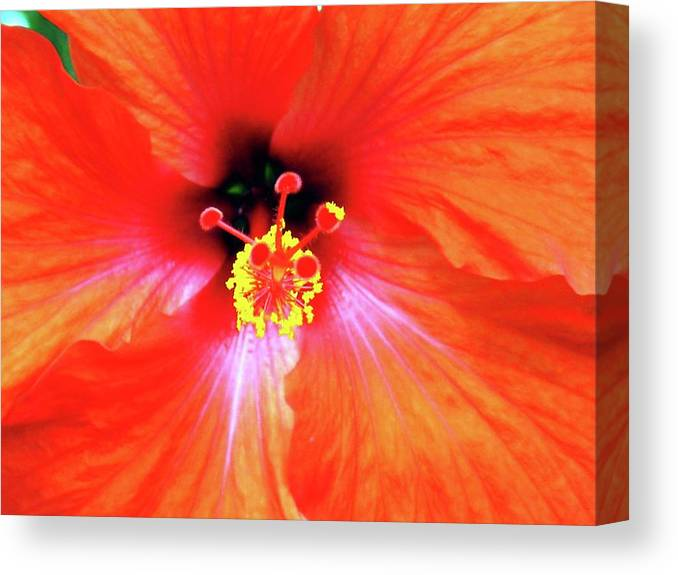 Flower Canvas Print featuring the photograph Flower On Fire by Annee Olden