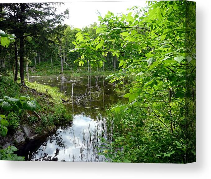 Landscape Canvas Print featuring the photograph Forest Lake Hideout by Dmytro Toptygin