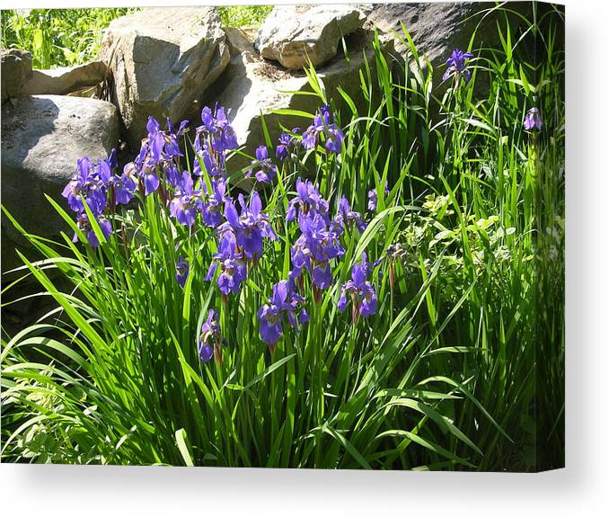 Flowers Canvas Print featuring the photograph Garden Elegance by Peter Williams
