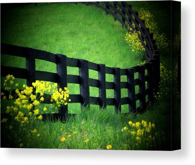 Fence Canvas Print featuring the photograph Golden Fence by Michael L Kimble