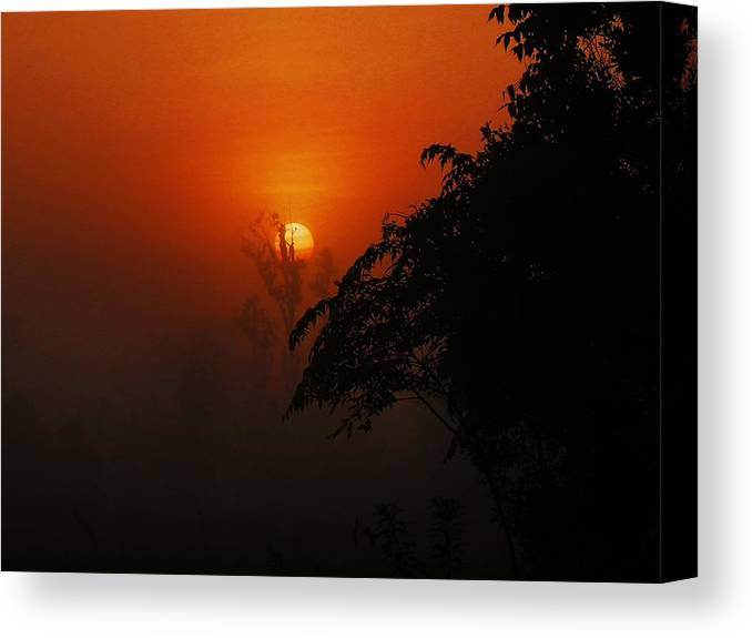 Nature Canvas Print featuring the photograph Good Morning Sunshine by Mike Farmer