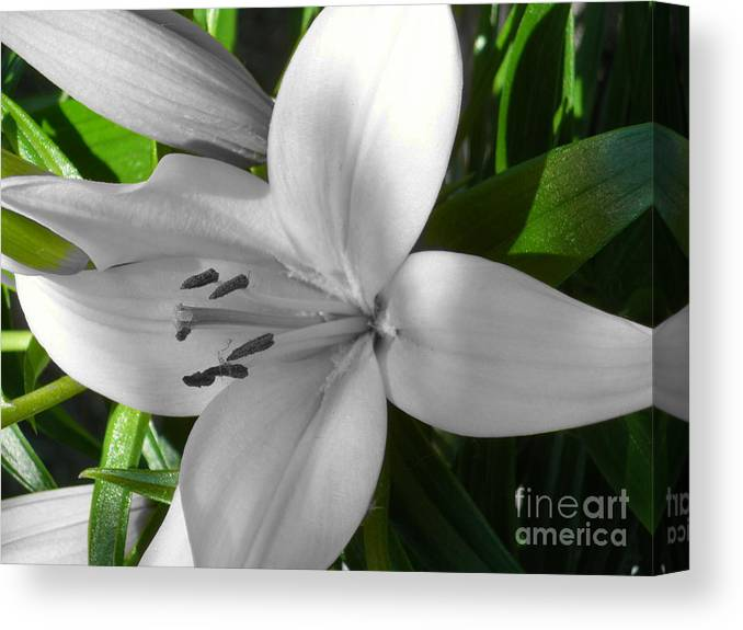 Digital+tint Canvas Print featuring the photograph Green Highlighted Lily by Sonya Chalmers