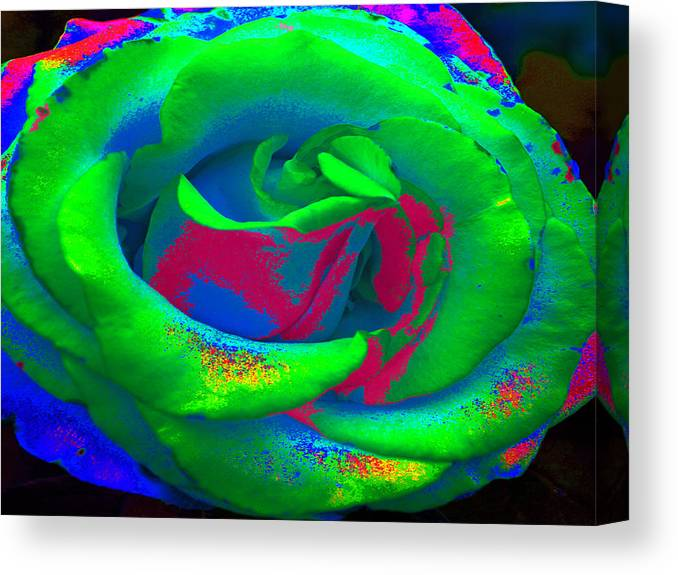 Rose Canvas Print featuring the painting Groovin Rose by Kim