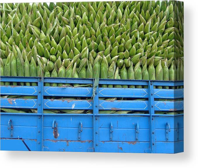 Corn Canvas Print featuring the photograph Indian Harvest by Mark Fuller