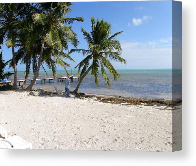 Landscape Canvas Print featuring the photograph Islamorada Palms by Karen Critcher