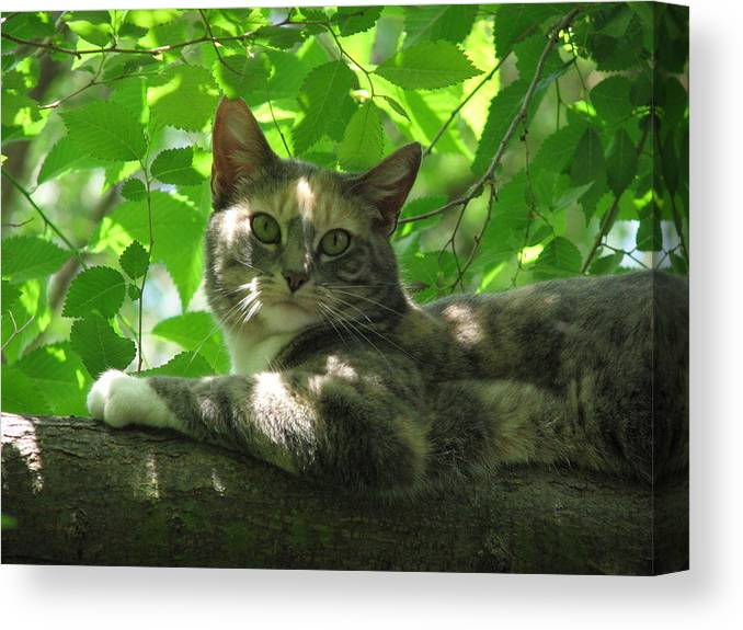 Canvas Print featuring the photograph Ivy In The Tree by Kathy Roncarati