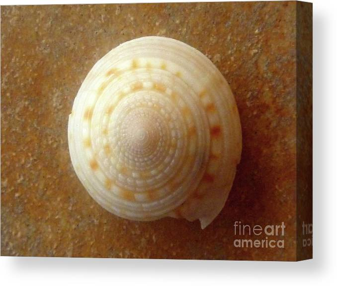 Nature Canvas Print featuring the photograph Jewels Of The Sea - Tiger's Eye Swirl by Lucyna A M Green