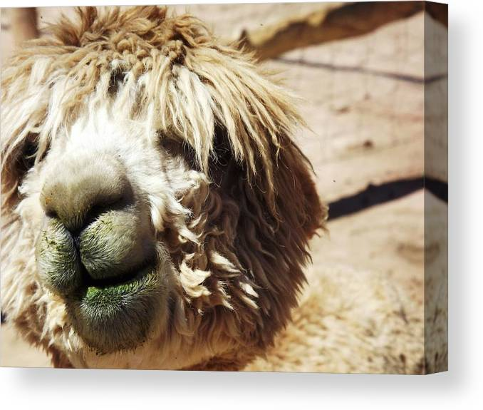 Animal Canvas Print featuring the photograph Just Too Cute To Be Ugly by Judy Schneider