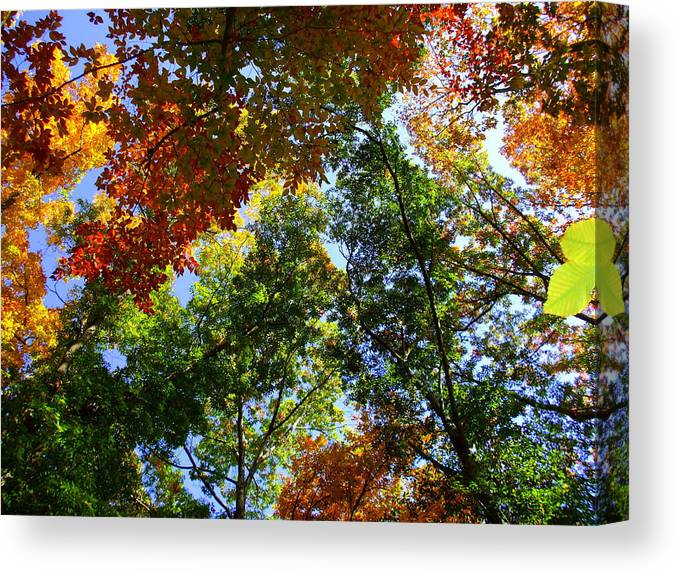 Nature Canvas Print featuring the photograph Kaleidoscope by Trudi Southerland
