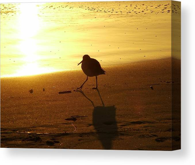 Sandpiper Canvas Print featuring the photograph Keep Truckin by John Loyd Rushing