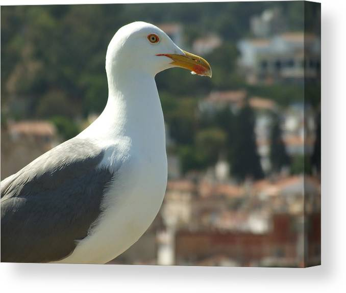 Seagull Canvas Print featuring the photograph Keeper Of The Citadel by Dorin Emanoil Pirvu