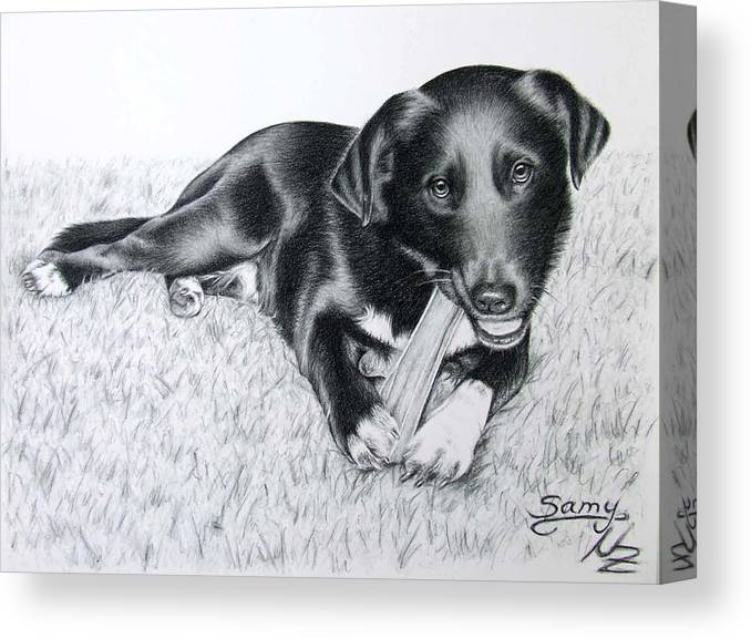 Dog Canvas Print featuring the drawing Labrador Samy by Nicole Zeug