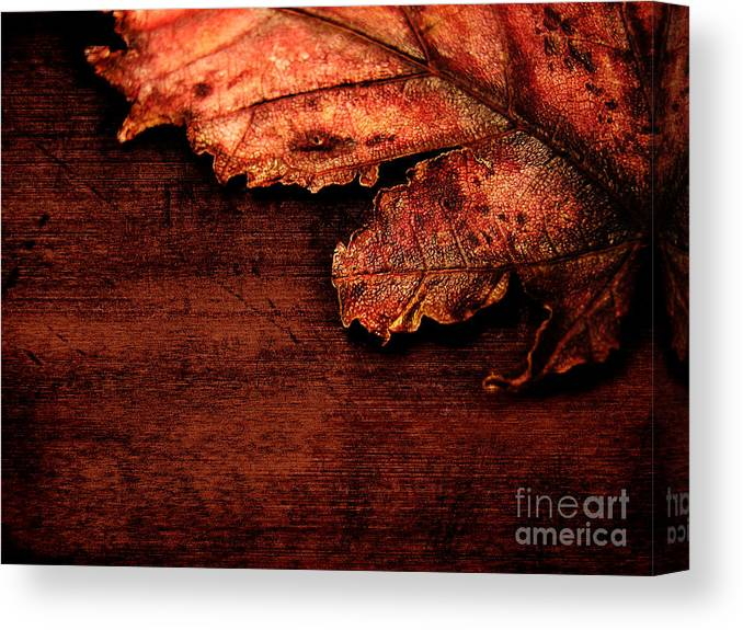 Red Canvas Print featuring the photograph Let Me Hold You... by Dana DiPasquale