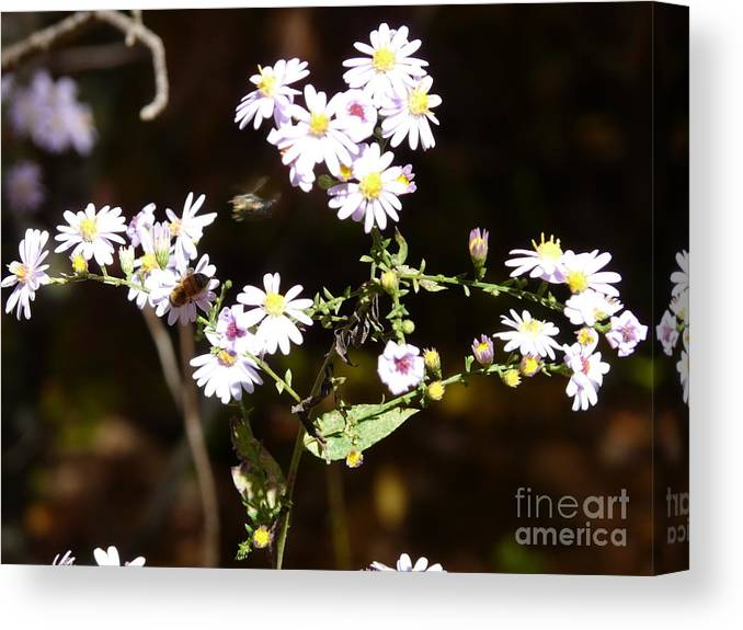 Bee Hornet Yellow Jacket Wild Flower Wild-flower Wildflower Nature Living Incests Autumn Canvas Print featuring the photograph Life by Wayde Gordon