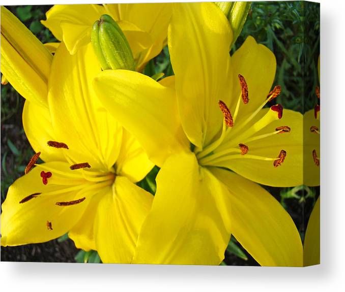 Lilies Canvas Print featuring the photograph Lilly Flowers Art Prints Yellow Lilies Floral Baslee Troutman by Baslee Troutman