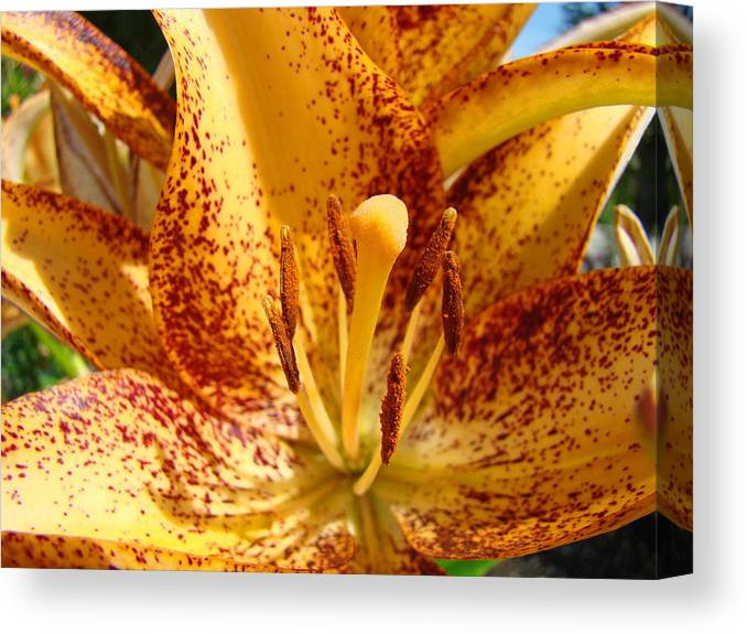 Lilies Canvas Print featuring the photograph Lily Flower Macro Orange Lilies Floral Art Print Baslee Troutman by Baslee Troutman