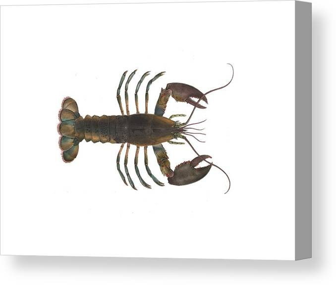 Lobster Canvas Print featuring the digital art Lobster by Sarah Pierson