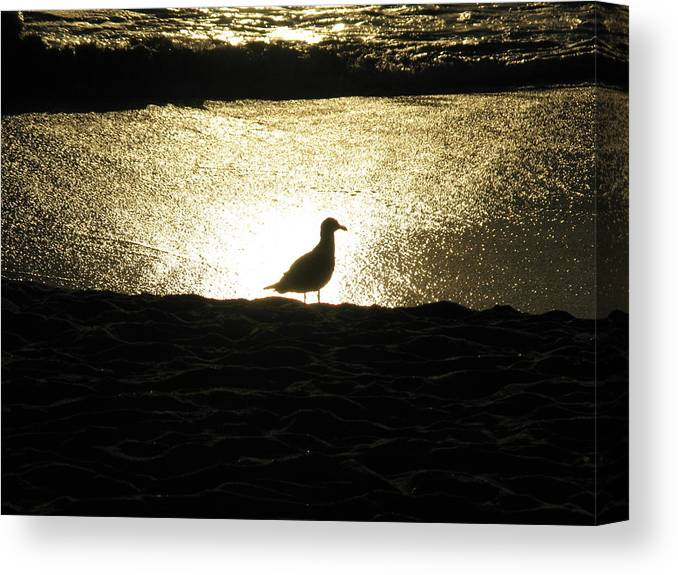 Ocean Canvas Print featuring the photograph Lone Star by John Loyd Rushing