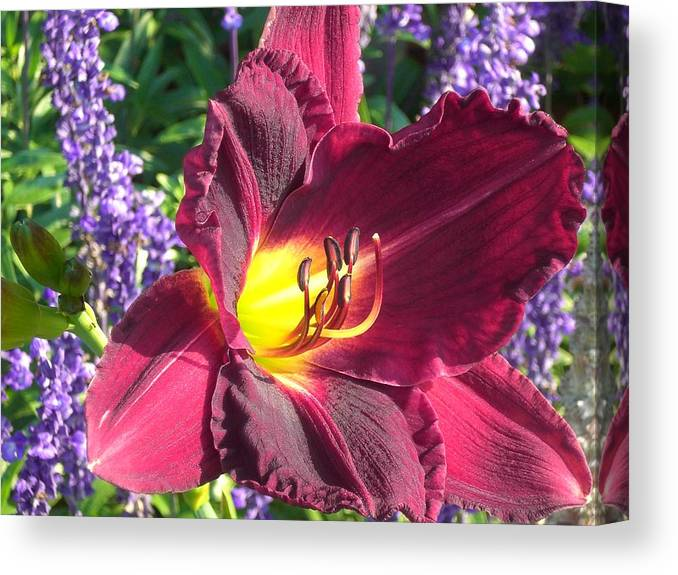 Lilly Canvas Print featuring the photograph Mom's Lilly by Wendy Robertson
