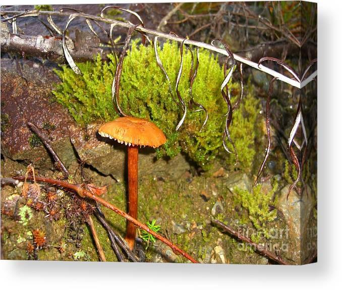 Mushroom Canvas Print featuring the photograph Mushroom Microcosm by Jim Thomson