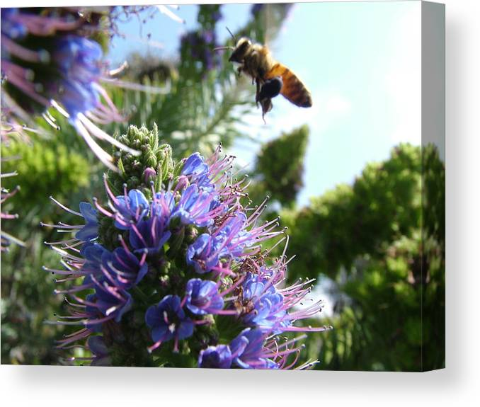 Bees Canvas Print featuring the photograph Nectar Landing by John Loyd Rushing
