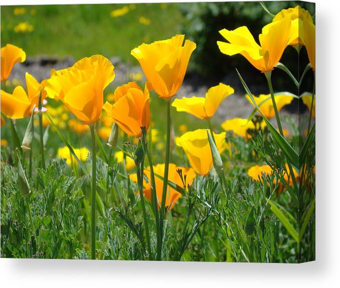 �poppies Art� Canvas Print featuring the photograph Office Art Poppies Poppy Flowers Giclee Prints Baslee Troutman by Baslee Troutman