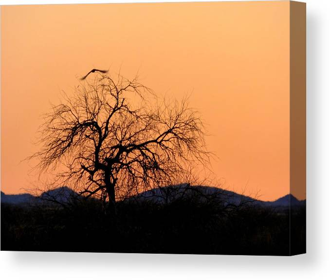 Sunset Canvas Print featuring the photograph Orange Glow Sunset In The Desert by Teresa Stallings