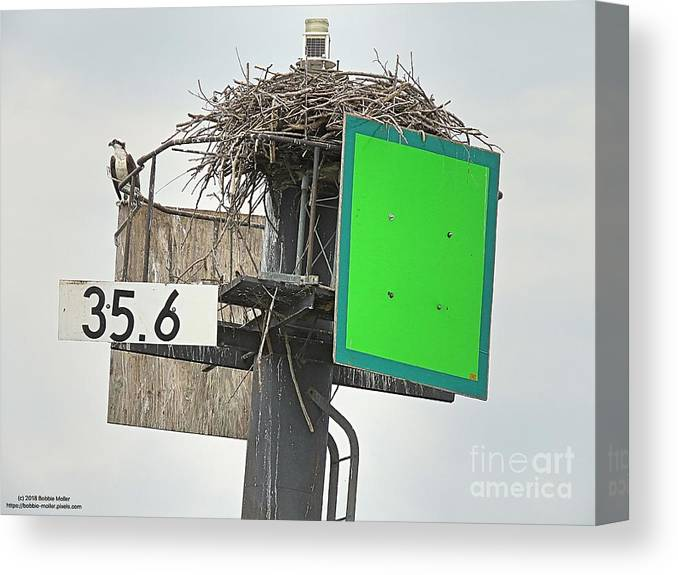 Osprey Canvas Print featuring the photograph Osprey At Its Nest In A Navigation Marker by Bobbie Moller