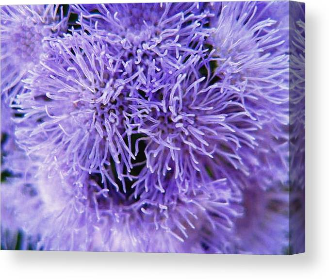 Floral Canvas Print featuring the photograph Out Of This World by Rhonda Barrett
