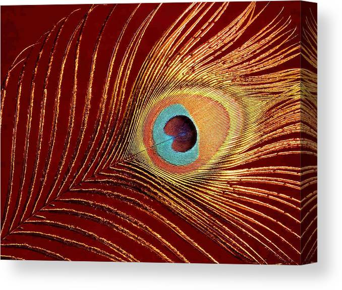 Peacock Feather Canvas Print featuring the photograph Peacock Feather by Dragica Micki Fortuna