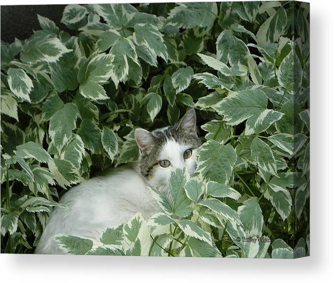 Cat Canvas Print featuring the photograph Peek A Boo Kitty by Tracey Vivar