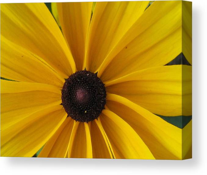 Flower Canvas Print featuring the photograph Pin Wheel by Robert Wilson