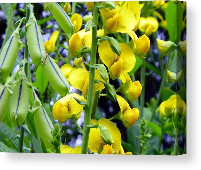 Wildflowers Canvas Print featuring the photograph Pods And Blooms by Mike Farmer