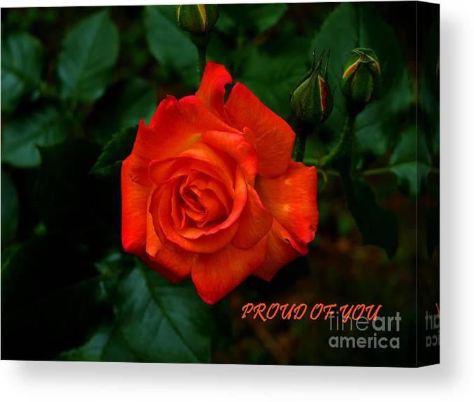 Rose Canvas Print featuring the photograph Proud Of You by Gail Bridger