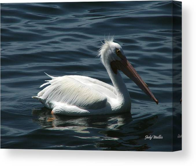 Birds Canvas Print featuring the photograph Punk Pelican - Side View by Judy Waller