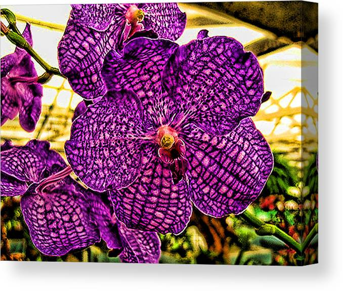 Flowers Canvas Print featuring the photograph Purple Orchid by Paul Cutright