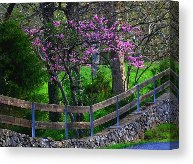 Redbuds Canvas Print featuring the photograph Redbud Corner by Michael L Kimble
