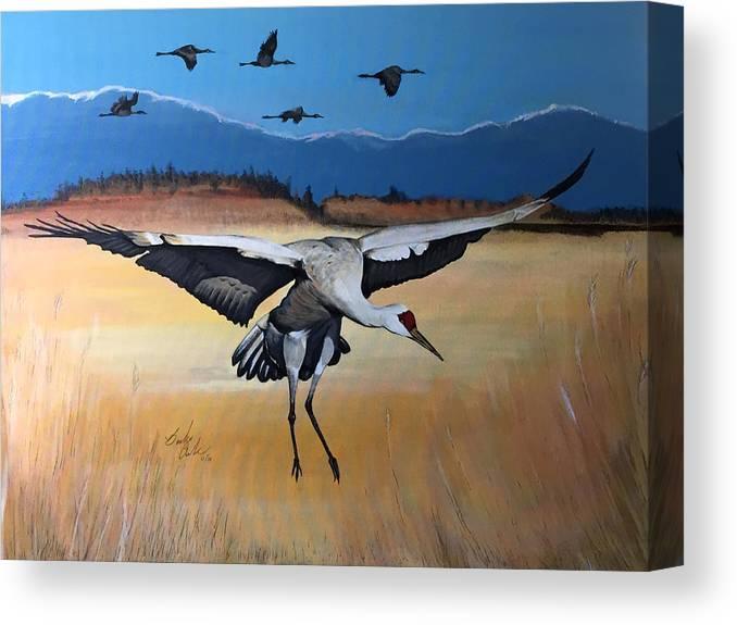 Crane Canvas Print featuring the painting Sandhill Crane Landing by Barbara Andrews
