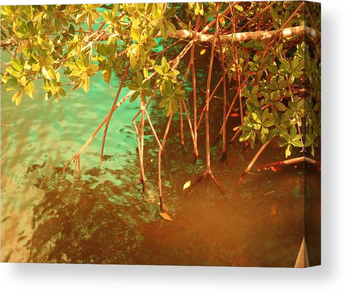 Nature Canvas Print featuring the photograph Sanibel Mangroves by Florene Welebny