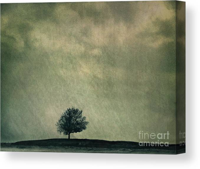 Blue Canvas Print featuring the photograph Screaming At The Top Of My Voice by Dana DiPasquale