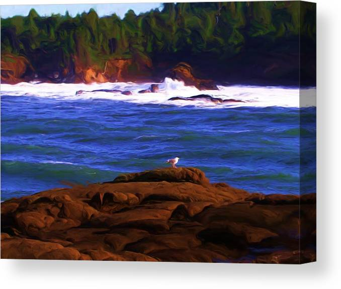 Seascape Canvas Print featuring the painting Seagull On Rock by Shelley Bain