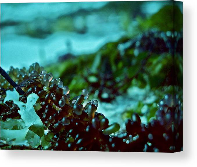 Canvas Print featuring the photograph Seaweed 1 by Lise Pellegrin