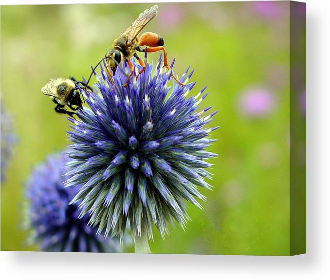 Bees Canvas Print featuring the photograph Sharing by Paul McCarthy