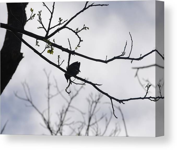 Birds Canvas Print featuring the photograph Solitude by Lakida Mcnair