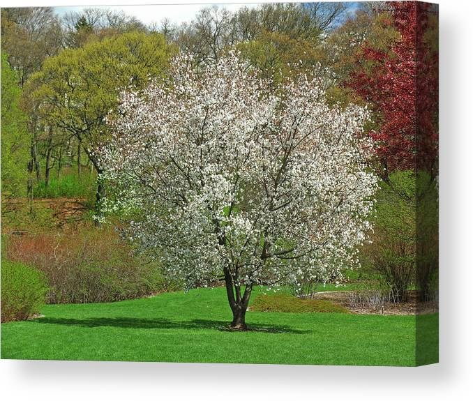 Spring Canvas Print featuring the photograph Spring Fever by Juergen Roth