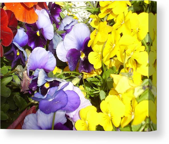Flowers Canvas Print featuring the photograph Spring Flowers by Yvette Pichette