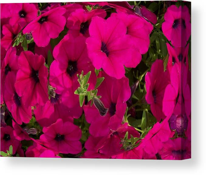 Summer Canvas Print featuring the photograph Summer Glamor by Vijay Sharon Govender