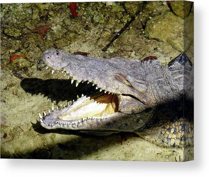 Crocodile Canvas Print featuring the photograph Sunbathing Croc by Francesca Mackenney
